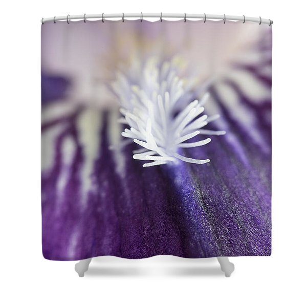 Bearded Iris 2 Shower Curtain