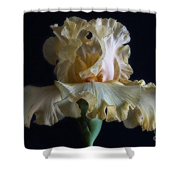 Bearded Iris 5 Shower Curtain