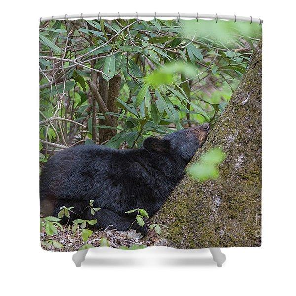 Bearly Awake Shower Curtain