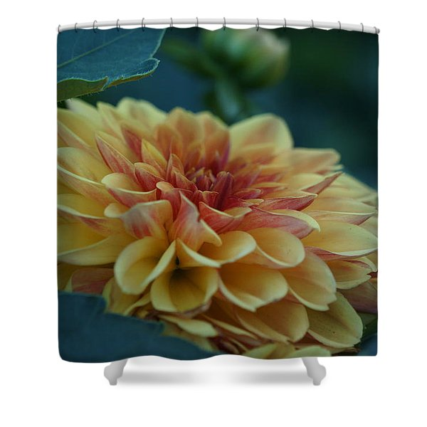 Beautiful Dahlia 2 Shower Curtain