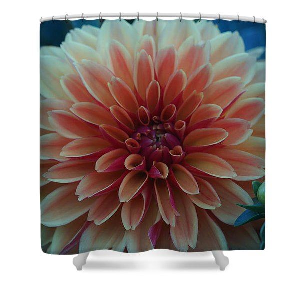 Beautiful Dahlia 3 Shower Curtain