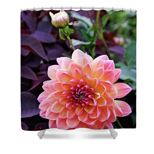 Beautiful Dahlia Shower Curtain