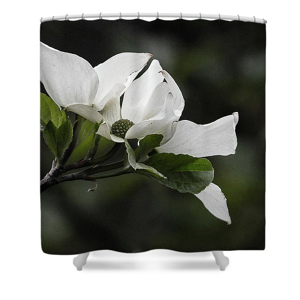 Beautiful Dogwood Shower Curtain