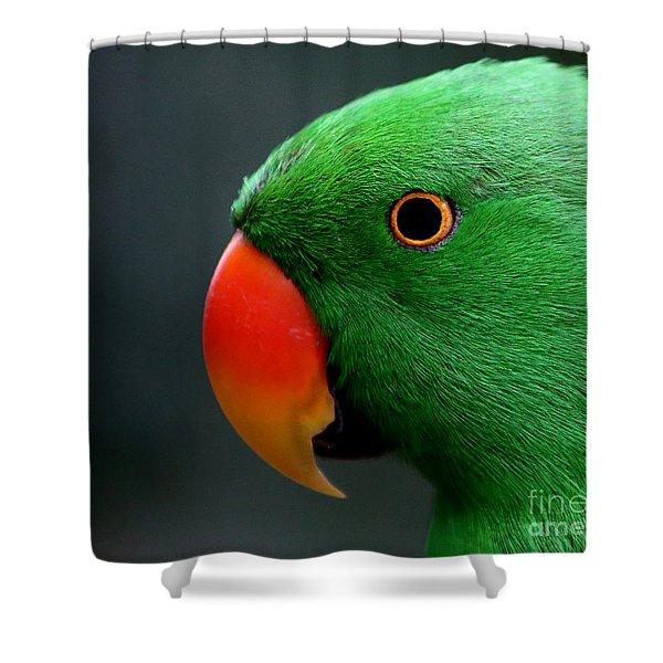 Beautiful Eclectus Parrot Shower Curtain