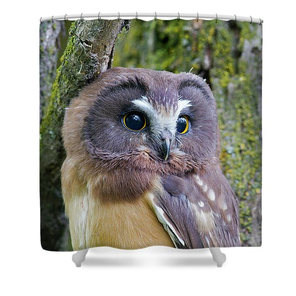 Beautiful Eyes Of A Saw-whet Owl Chick Shower Curtain