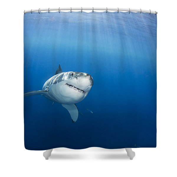 Beautiful Great White Shower Curtain
