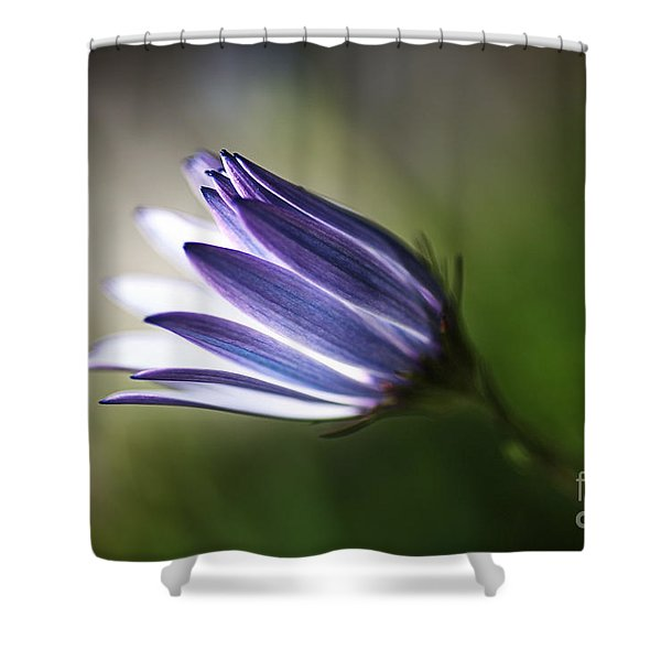 Beautiful Inner Glow Of The Daisy Shower Curtain