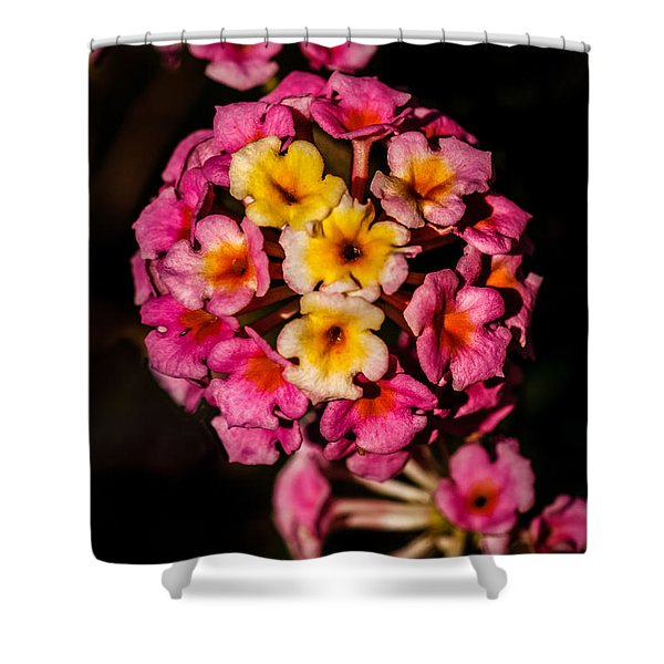 Beautiful Lantana Shower Curtain