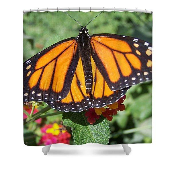 Beautiful Monarch Butterfly Shower Curtain