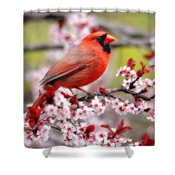 Beautiful Northern Cardinal Shower Curtain