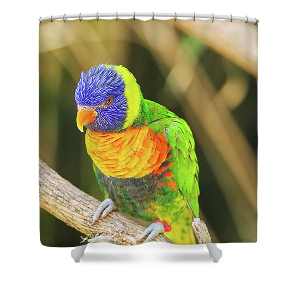 Beautiful Perched Mccaw On A Branch. Shower Curtain