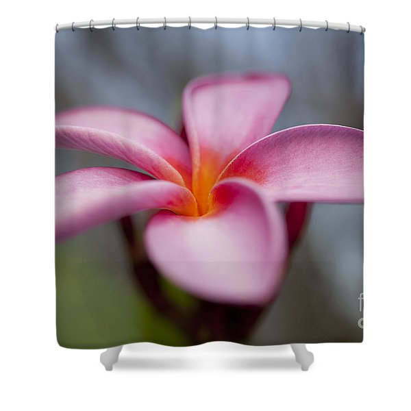 Beautiful Pink Plumeria Flower Shower Curtain