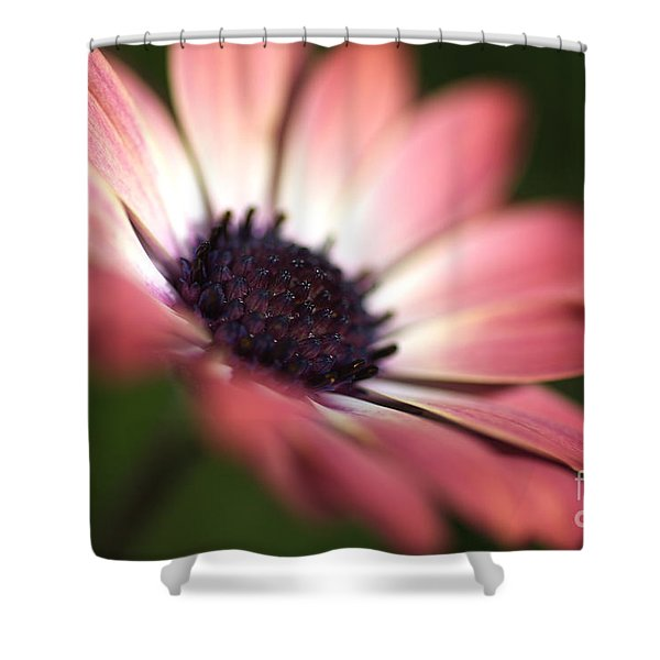 Beautiful Rich African Daisy Zion Red Flower Shower Curtain