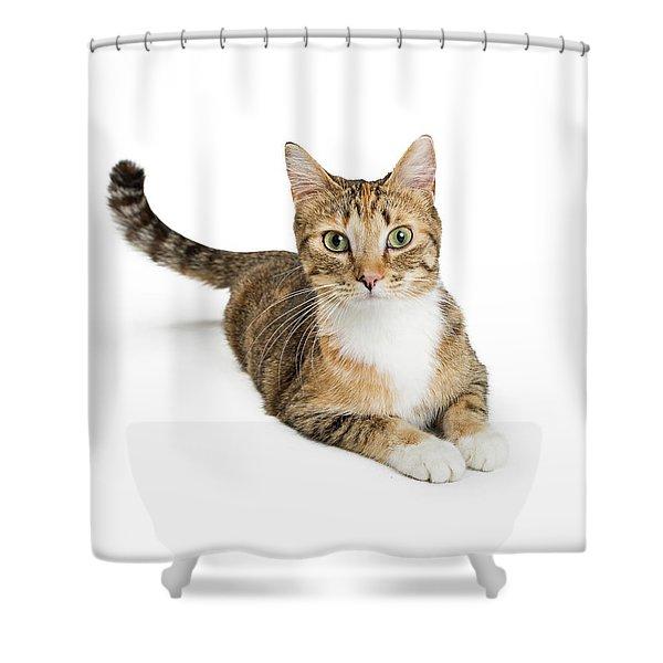 Beautiful Tabby Cat Looking At Camera Shower Curtain