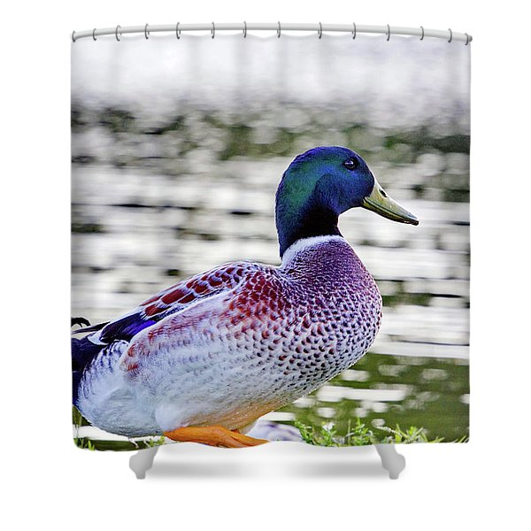 Beautiful Vibrant Mallard Duck Shower Curtain