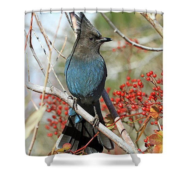 Beauty And The Beak Shower Curtain