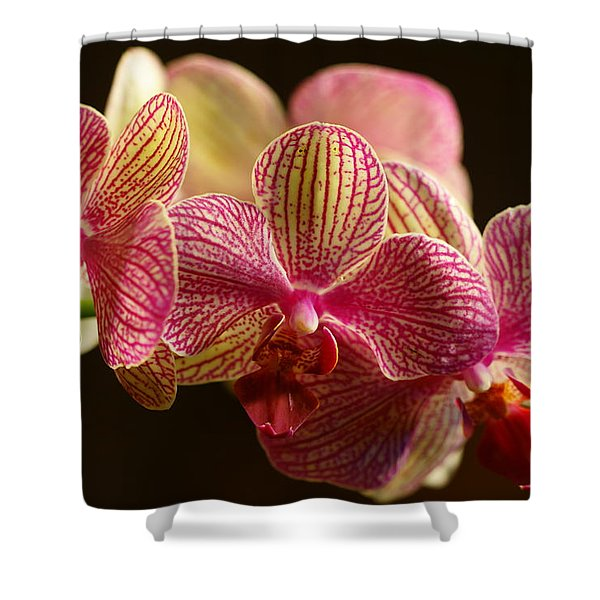 Beauty Up Close 3 Shower Curtain