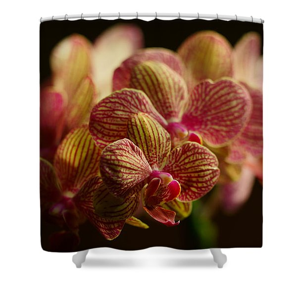Beauty Up Close 5 Shower Curtain