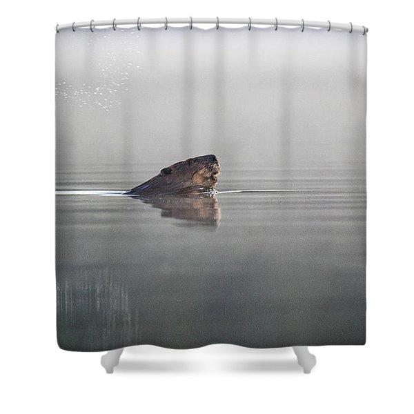 Beaver Tail Shower Curtain