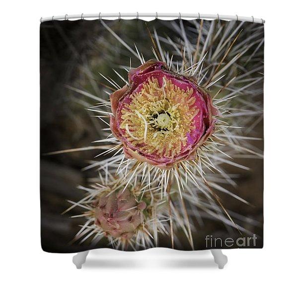 Beavertail Cactus Shower Curtain