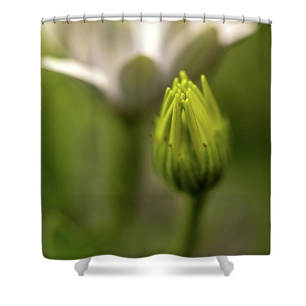 Becoming Shower Curtain