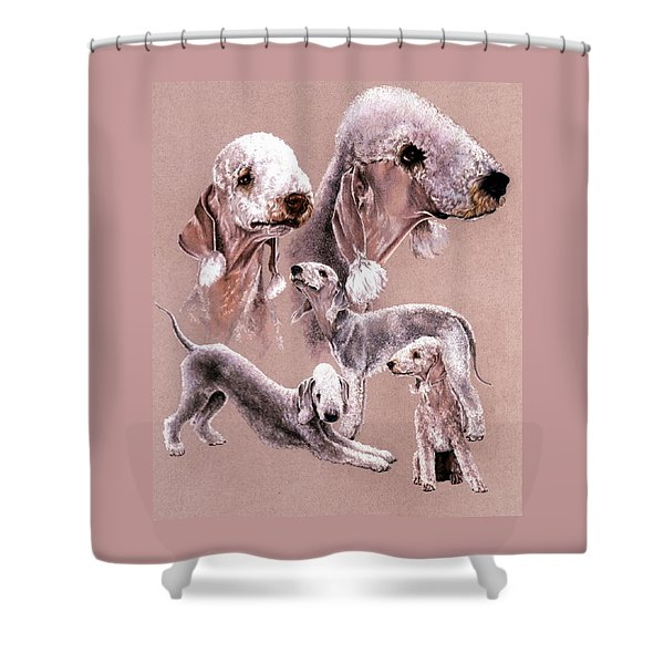 Shower Curtain featuring the drawing Bedlington Terrier by Barbara Keith