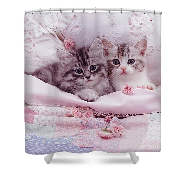 Bedtime Kitties Shower Curtain