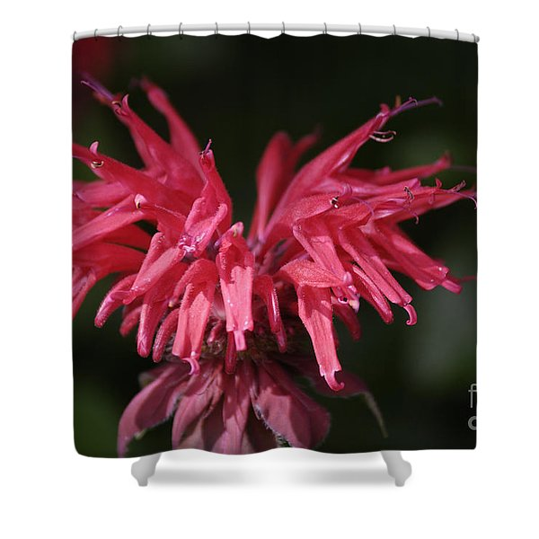 Bee Balm Shower Curtain