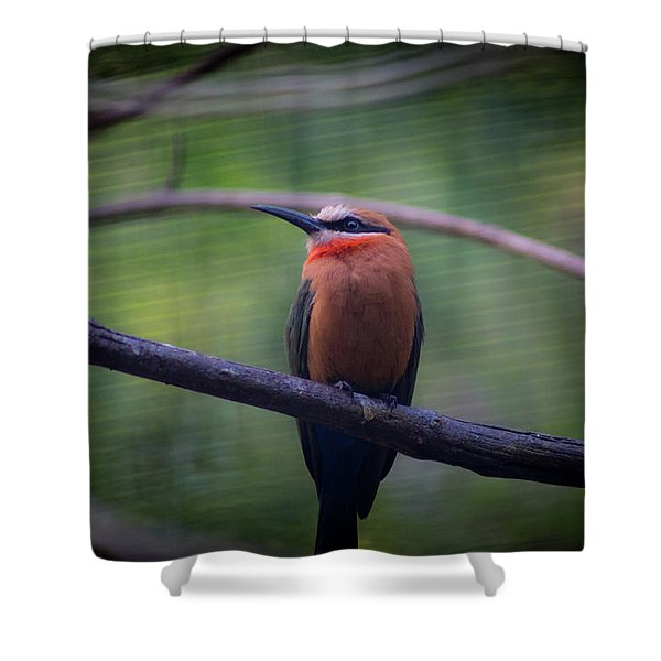 Bee-eater Shower Curtain