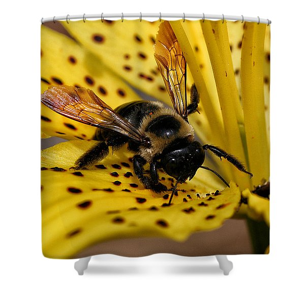 Shower Curtain featuring the photograph Bee On A Lily by William Selander