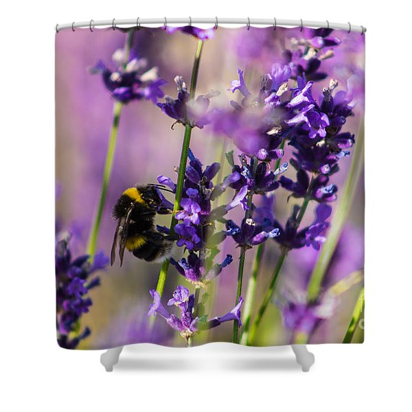 Bee On Lavender Shower Curtain