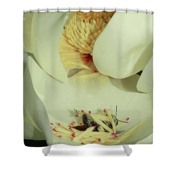 Bee Pollen Overdose Shower Curtain by Deborah Benoit