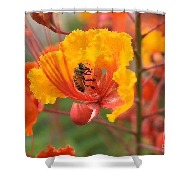 Bee Pollinating Bird Of Paradise Shower Curtain