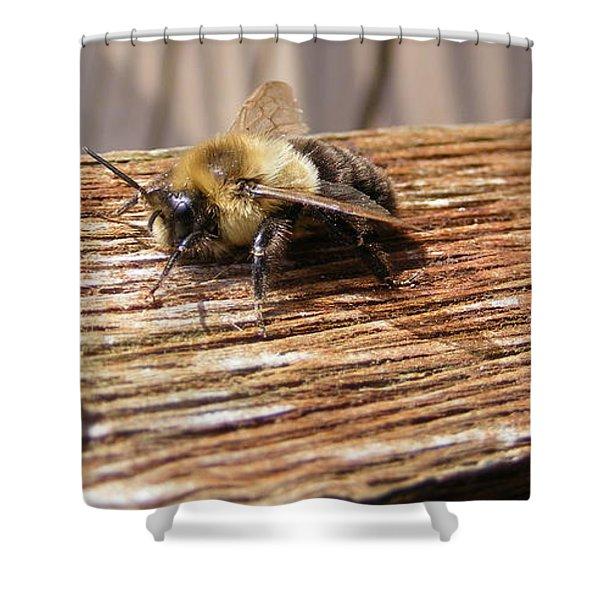Bee-u-tiful Shower Curtain