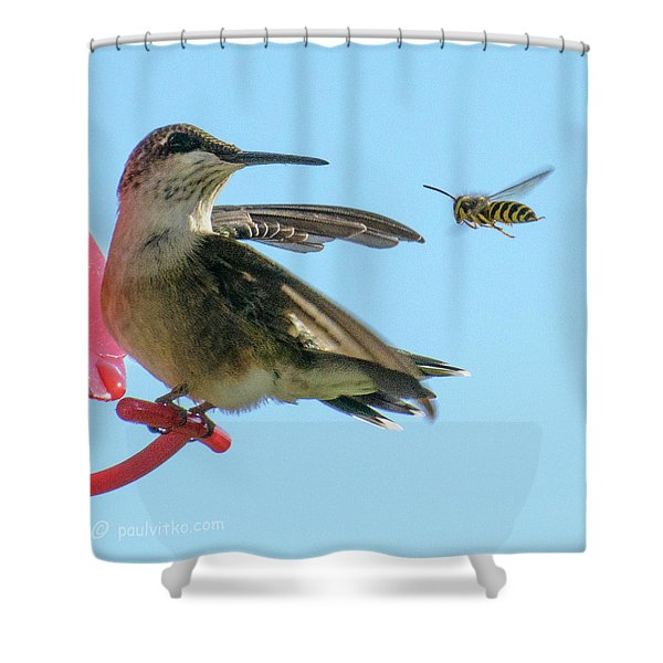 Bee_bird Shower Curtain