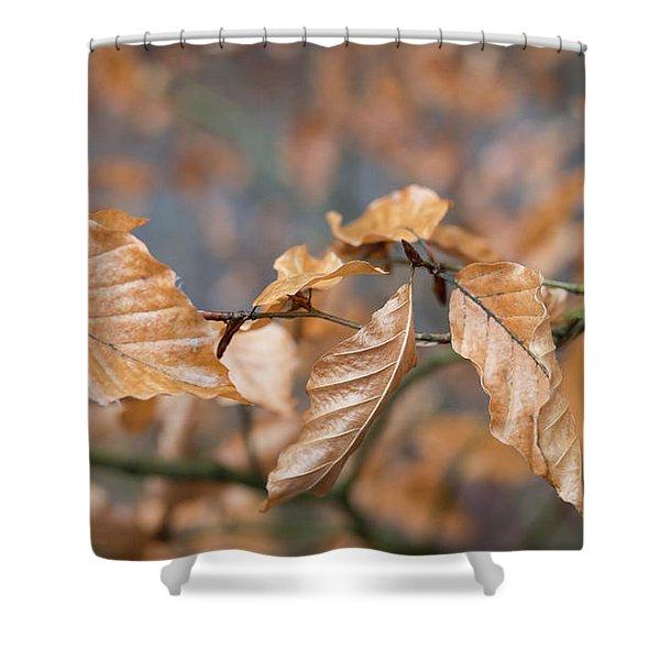 Beech Garland 3 Shower Curtain