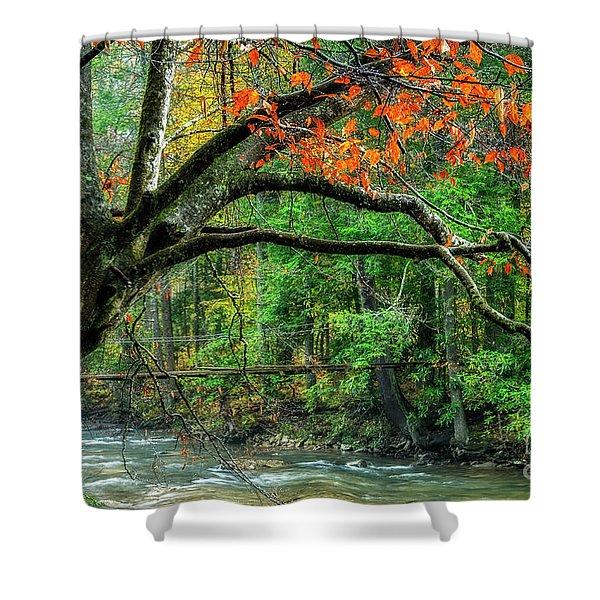 Beech Tree And Swinging Bridge Shower Curtain