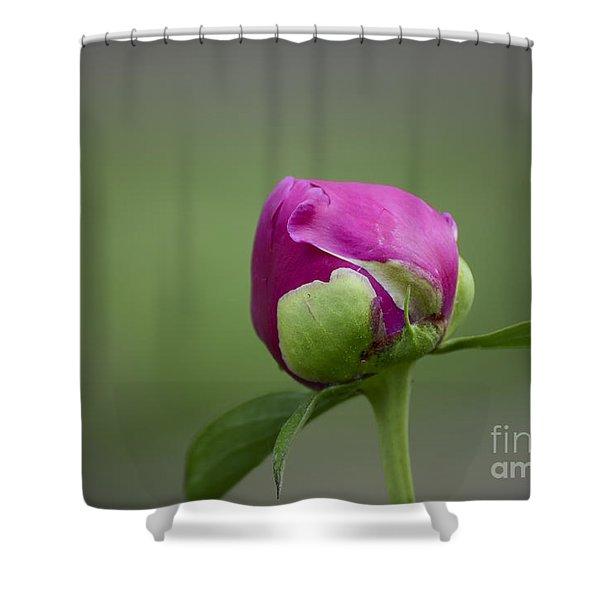 Simple Beginnings Shower Curtain