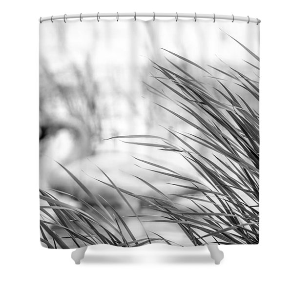 Behind The Grass Shower Curtain