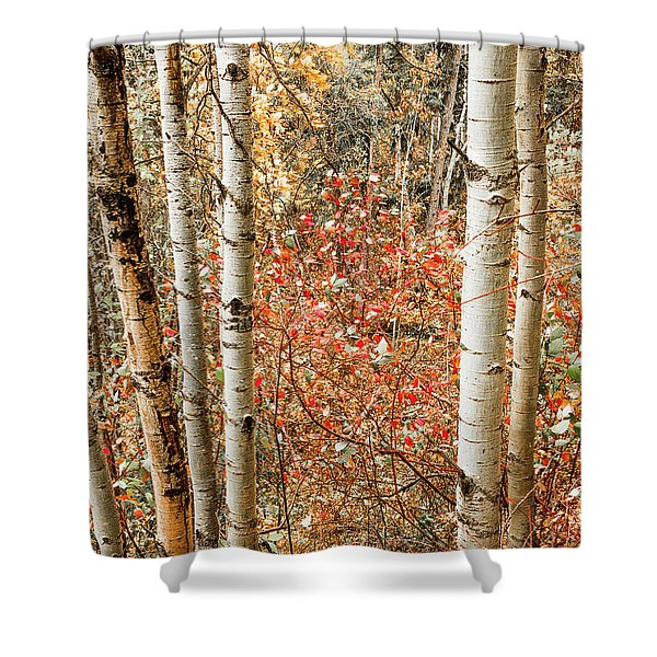 Behind The Trees Shower Curtain