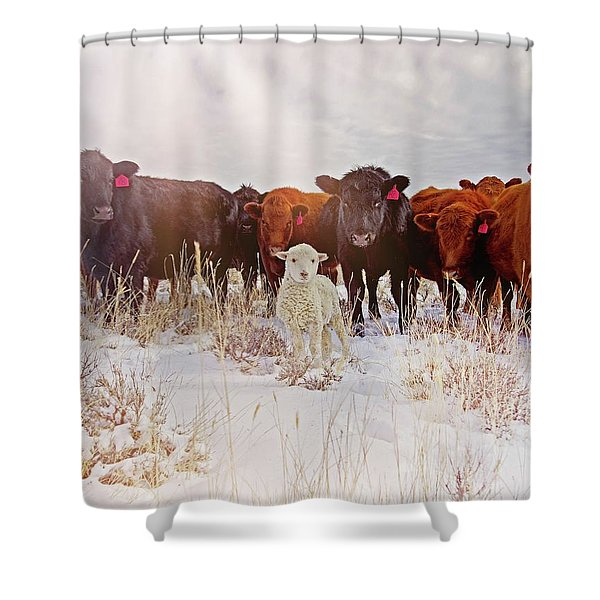 Behold Shower Curtain