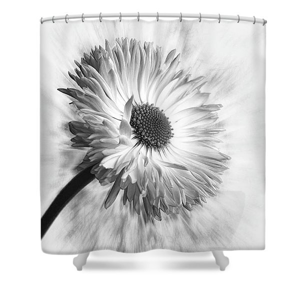 Bellis In Mono  #flower #flowers Shower Curtain