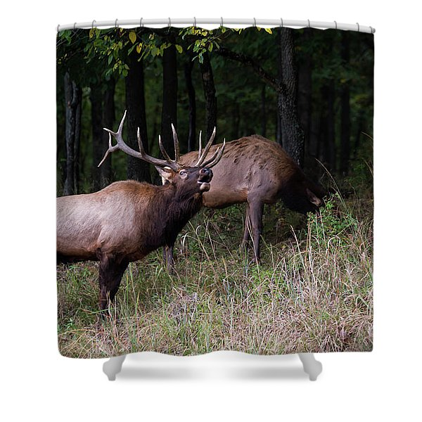 Shower Curtain featuring the photograph Bellowing by Andrea Silies