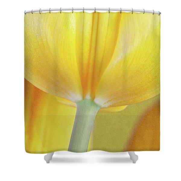 Beneath The Yellow Tulip Shower Curtain