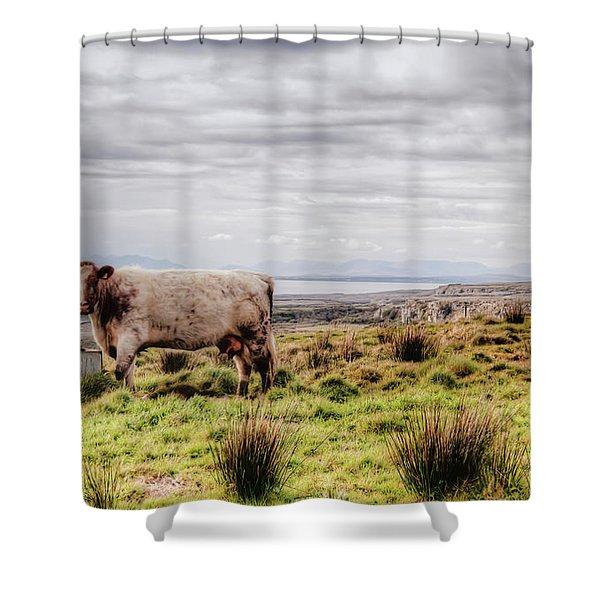 Besty My Irish Cow Shower Curtain