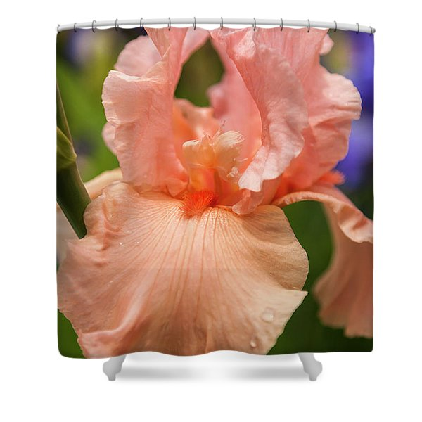Beverly Sills Iris, 2 Shower Curtain