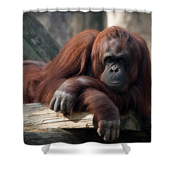 Big Hands Shower Curtain
