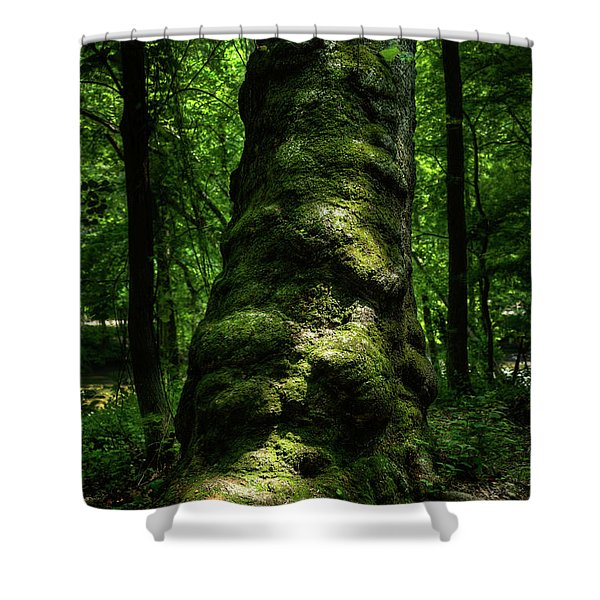 Big Moody Tree In Forest Shower Curtain