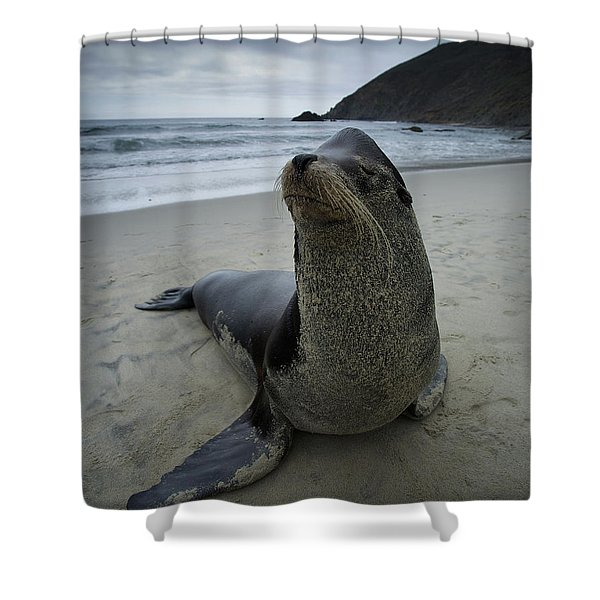 Big Seal Shower Curtain
