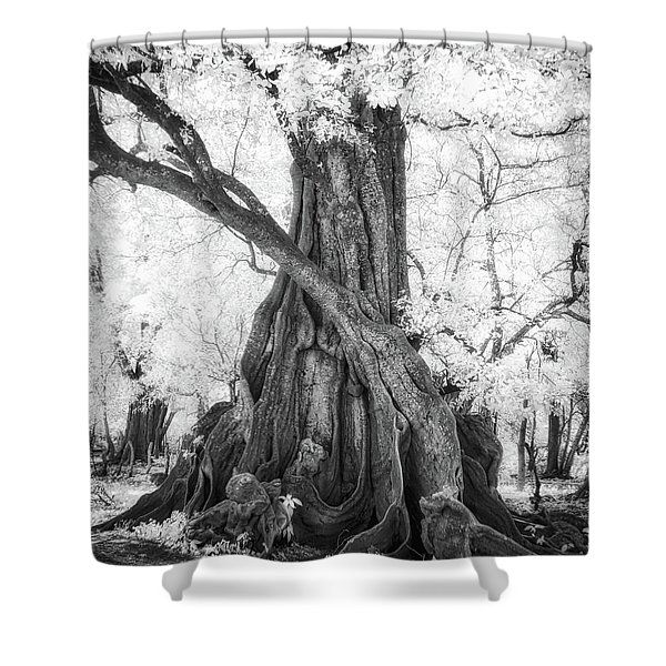 Big Tree Shower Curtain